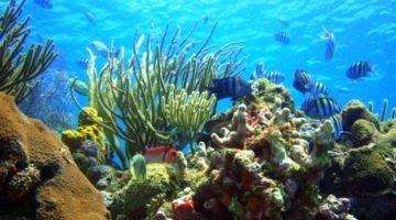 Buceo Los Cayos: Jhonny Cay, Acuario y Haynes Cay a menos de dos kilómetros y a 16 millas náuticas al suroeste Cayo Bolívar y Albuquerque completan la espectacular vocación paradisíaca de este destino. Los cayos cercanos son ideales para el descanso, mientras que los lejanos se convierten en el delirio de los aficionadosal careteo y el buceo en honor a su extensa barrera de coral. Deportes Náuticos Windsurf, kitesurf, vela ligera y de crucero y esquí náutico, buceo a pulmón libre o con tanques, motos de mar, pesca submarina y de altura. Naturaleza Apreciar la fauna y flora marinas en un recorrido hacia los cayos y los manglares en embarcaciones como un galeón pirata, un semi sumergible y un bote con fondo de vidrio se constituyen en uno de los principales atractivos de este pintoresco destino del Caribe. (recuadro) LUGARES INNOLVIDABLES · Playa de Spratt Bight · El Cove · Fresh Water Bay · La Laguna Big Pond · La Loma · Manta´s City · Buque Hundido · El Puente de los Enamorados San Andrés, Providencia y Santa Santa Catalina